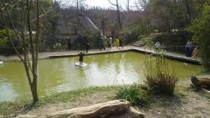 忍者村水グモ池